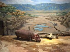 River Hippo