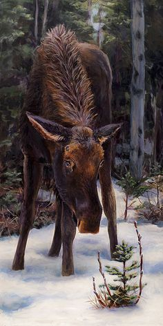 Young Bull Moose And Pussy Willows Springtime In Alaska Wildlife Painting by Karen See the painting here: http://fineartamerica.com/featured/young-moose-and-pussy-willows-springtime-in-alaska-wildlife-painting-karen-whitworth.html - Wildlife Art Decor - Deer - Wilderness -
