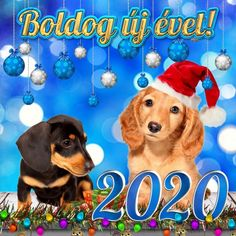 Click To Watch Share Pictures, Animated Gifs, Happy New Year 2020, Evo, Scooby Doo, Seasons, Fictional Characters, Image, Watch