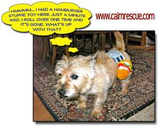 Col. Potter Cairn Rescue Network: Wacky Wednesday! Gordee