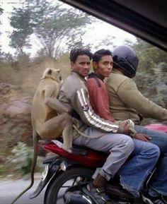 Coisas Engraçadas Que Acontecem na India