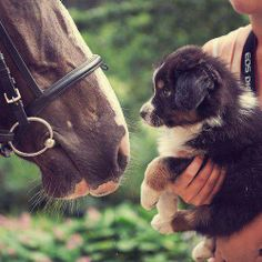 Horse and Dogs <3