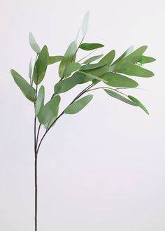 This gorgeous green artificial eucalyptus leaf spray is absolutely beautiful greenery for your DIY wedding arrangements! Greenery Background, Plant Background, Silk Plants, Foliage Plants, Walpapers Hd, Eucalyptus Branches, Leaf Photography, Plant Aesthetic, Leave In