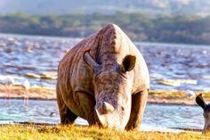 Lake Nakuru National Park_rhino