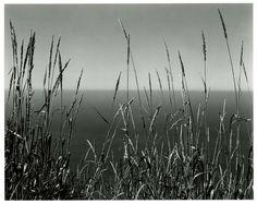 OnlineGalleries.com - Grass Against Sea, Edward Weston