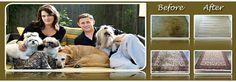 Steam Clean Carpet, Deep Carpet Cleaning, Steam Cleaning, How To Clean Carpet, Professional Carpet Cleaning, Labrador Retriever, Dogs, Animals, Labrador Retrievers