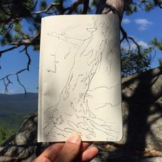 8.30.17 Lunchtime #drawing: A gnarled tree on the Owl's Head Trail near Keene on private land and closing to the public at the end of this year a great family hike with views for all three generations. . . . #NicksLunchboxService #gnarledtree #conifer #owlsheadtrail #owlsheadkeene #keene #adirondacks #hiking #mountains #art #sketchbook #drawingaday