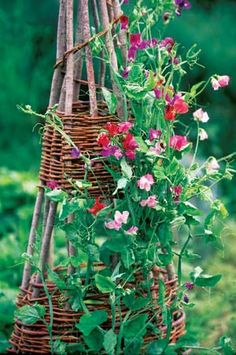 Sweet peas on a handmade trellis ~ Homemade garden trellises provide a perfect place to grow vining plants. The same woven twigs used to make wattle fences can be used to create rings that stabilize and beautify garden towers. Read more: http://www.motherearthnews.com/multimedia/image-gallery.aspx?id=112322=2#ixzz2QN2wzm6C