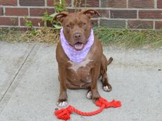 Brooklyn Center   HATTIE JONES - A0980255 ***RETURNED 8/7/14 - PERSONAL PROBLEMS***  SPAYED FEMALE, TAN, PIT BULL MIX, 1 yr, 11 mos OWNER SUR - EVALUATE, NO HOLD Reason PERS PROB  Intake condition EXAM REQ Intake Date 08/07/2014, From NY 10312, DueOut Date 08/10/2014,  https://www.facebook.com/Urgentdeathrowdogs/photos/a.617941078218775.1073741869.152876678058553/853927577953456/?type=3&theater