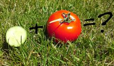 Całkiem zdrowo: Ogórek i pomidor - łączyć czy nie łączyć?