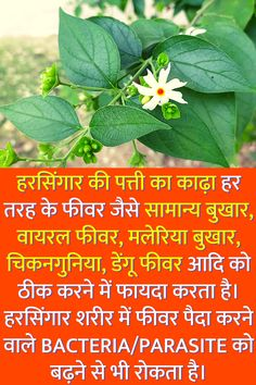 Natural Health Tips, Good Health Tips, Health And Fitness Tips, Health And Nutrition, Home Health Remedies, Natural Health Remedies, Ayurvedic Medicine, Herbal Medicine, Tips For Happy Life