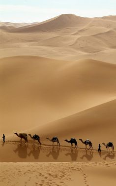 The Silk Road, a camel train led by Tuaregs. Desert Dunes, Travel Pictures, Cool Pictures, Foto Picture, Desert Safari Dubai, Desert Life, Silk Road, Belle Photo, Beautiful World
