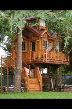 Amazing Tree House