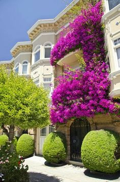 A flowering apartment balcony in San Francisco