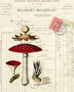 Vintage Illustrations Botanical Print Mushrooms I - Original artwork created from vintage bookplates, etchings Botanical Drawings, Botanical Illustration, Botanical Prints, Vintage Prints, Vintage Art, Collages D'images, Fleur Design, Foto Transfer, Guache