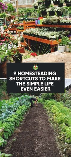 Practicing self-sufficiency and preparedness but with a jam packed schedule, a full-time job, or very little space? Here are a few homesteading shortcuts.