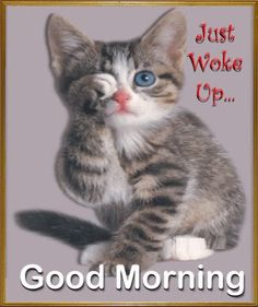 good morning ~ good morning quotes _ good morning _ good morning quotes for him _ good morning quotes inspirational _ good morning wishes _ good morning beautiful _ good morning greetings _ good morning quotes funny Good Morning Cat, Good Morning Picture, Morning Pictures, Morning Humor, Good Morning Wishes, Morning Pics, Funny Morning, Good Morning Best Friend, Good Morning Animals