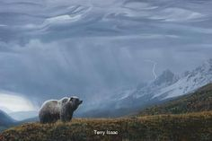 """Painting of Grizzly Bear """"""""Storm Watch"""""""", by Terry Isaacwith deluxe rustic looking frame.You can purchase the 20""""""""x30"""""""" giclee canvas limited edition signed by Terry Isaac.for $600 not framed. Ships r"""