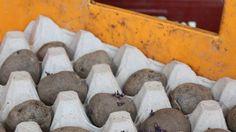 Ein Kartoffelacker auf dem Balkon  Gemüse aus dem Supermarkt? Kartoffeln kann man auch auf dem Balkon pflanzen. Die Mitarbeiter des Berliner Prinzessinnengartens erklären, wie's geht