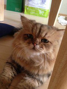 Foo-Chan | Emokatze Foochan ist traurig, braucht deine Umarmung und ein paar ...