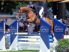 Warmblood Horses, Oldenburg, Equestrian, Horseback Riding, Show Jumping, Equestrian Problems
