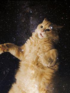 New post on catsdogsgifs Cute Baby Bunnies, Cute Cats, Funny Cats, Neko Cat, Kawaii Cat, Cat From Outer Space, Cute Cat Memes, Galaxy Cat, Cat Posters