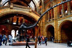 Museo de Historia Natural de Londres en Kensington