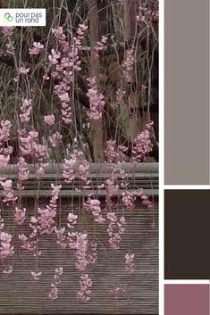 Palette gris et lila. Définis les couleurs de ta marque avec un tutoriel détaillé illustré de nombreux exemples. https://www.pourpasunrond.fr/definir-couleurs-de-marque/