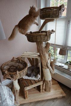 Cool Cat Trees, Diy Cat Tree, Cool Cats, Niche Chat, Turkish Angora Cat, Cat Playground, Animal Room, Cat Scratcher, Cat Room