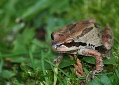 Hot Topics in Washington State: Frogs Bellevue, Washington  #Kids #Events