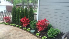 Dwarf Red Azaleas Google Search Landscaping Front 400 x 300