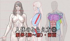 Hand Drawing Reference, Anatomy Reference, Art Reference Poses, Manga Drawing Tutorials, Drawing Techniques, Drawing Tips, Body Anatomy, Anatomy Art, Human Anatomy Drawing