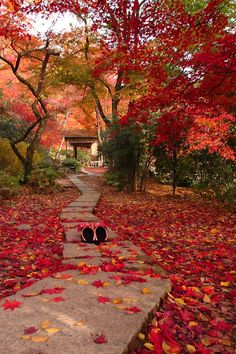 "Kyoto, Japan this picture reminds me of a favorite book, ""The Gardens of Kyoto"""