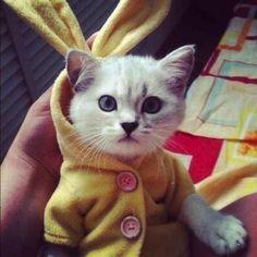 Le plus mignon chandail de chat!