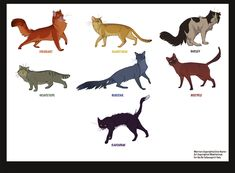 Warrior Cats by ~wadifahtook on deviantART