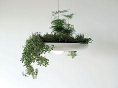 Originele lamp met planten