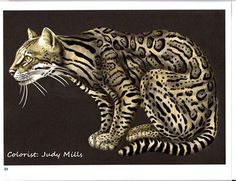 Ocelot By Susan Vavouyios
