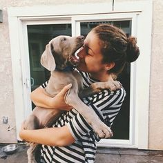 Let Me Eat Your Face // weimaraner pup