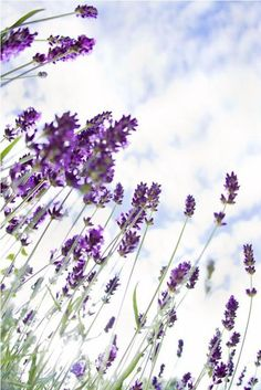 Adel miller stripping near lavender flowers — photo 4