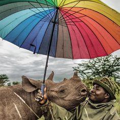 Inspiring rangers are hand-raising three baby rhinos at Lewa Wildlife Conservancy in Kenya Picture:: @AMIVITALE/National Geographic