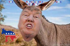 DONALD TRUMP Full description here: https://plus.google.com/+VinKonings/posts (tag: satire - parody, Donald Trump)