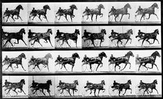 Photographer Eadweard Muybridge uses high-speed stop-motion photography to capture a horse's motion. The photos prove that the horse has all four feet in the air during some parts of its stride. The shots settle an old argument … and start a new medium and industry.