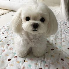 Baby Animals Super Cute, Cute Baby Dogs, Cute Little Puppies, Cute Cats And Dogs, Cute Dogs And Puppies, Cute Little Animals, Cute Funny Animals, Pet Dogs, Baby Animals Pictures