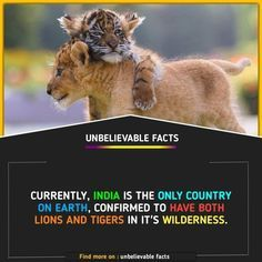 Wierd Facts, Wow Facts, Intresting Facts, Real Facts, Wtf Fun Facts, Funny Facts, Interesting Science Facts, Interesting Facts About World, Unbelievable Facts