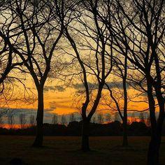 【nekotea_skywalker】さんのInstagramをピンしています。 《Silhouette Of Winter Trees At Sunset. 水元公園にて  #葛飾 #水元公園 #夕焼け #夕焼け空 #夕焼け雲 #グラデーション #森 #シルエット #tokyo #sunset #sunsets #sky #silhouette #skyporn #forest #trees #park #japan #eyeem #eyeemoninstagram #gradation》