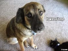 That cat doesn't look well. #DoggieInStyle #Dog #CuteDog