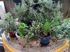 Growing Herbs on the Balcony