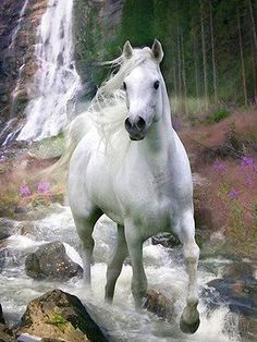 Pretty white grey horse running down the stream in the mountains, with wild flowers and waterfall in the background.