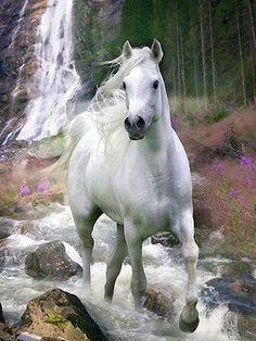 Wit paard in het bos