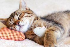 Treine seu gato para ele deixar você dormir à noite